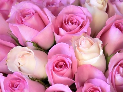 http://up.haridy.org/storage/pink-roses.jpg